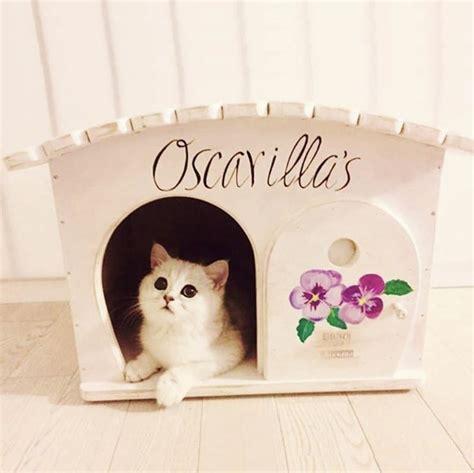 cucce per gatti da interno cuccia per gatti e cani da interno ed esterno in legno