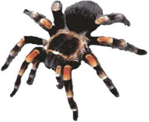 imagenes animales artropodos animales invertebrados tercero sanfelix
