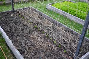 easy pea trellis diy trellis ideas for beans peas and how they re