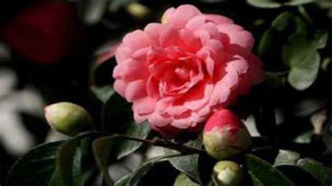 world best flower top 10 list of rarest flower in the world youtube