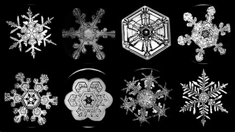 snowflake bentley snowflake bentley his unique snowflakes ever widening