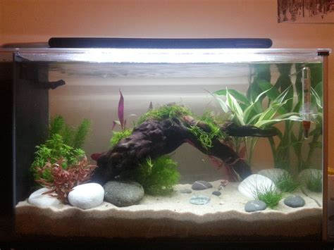 Fluval Spec Aquascape by A Planted Fluval Spec V One Of The Tanks We Re