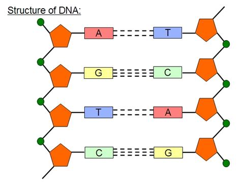 dna diagram oldephartte in 5 oct blogs i m following