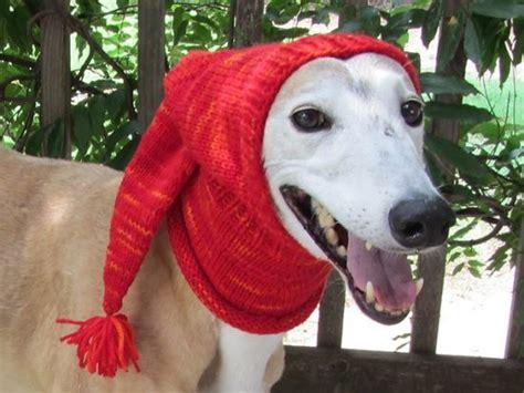 greyhound knitted hat pattern crochet hat pattern ideas best collection tutorial