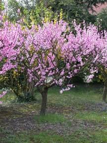 arbres fruitiers d 233 coratifs pratique fr