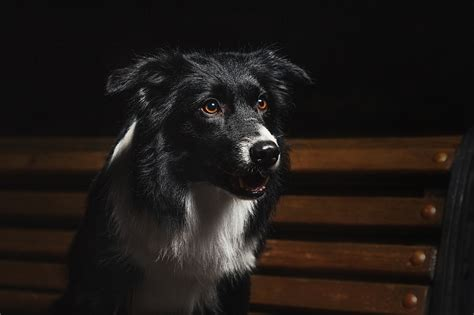 can dogs see in the can dogs see in the pet care facts