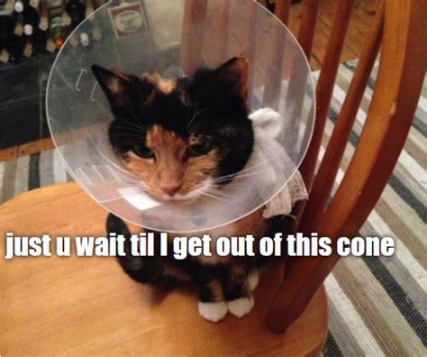 Meme Generator Cat - cat meme generator piday raspberrypi raspberry pi
