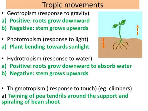 tropic movements in plants movements in animals and plants ppt