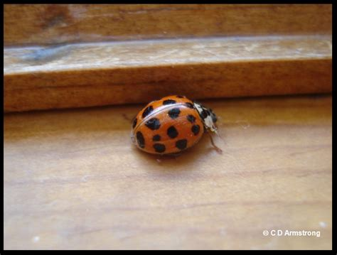 how to keep ladybugs out of house ladybugs in house winter house plan 2017