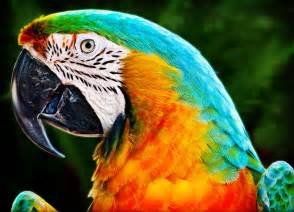 colorful parrots colorful macaw parrot photograph by gary cain