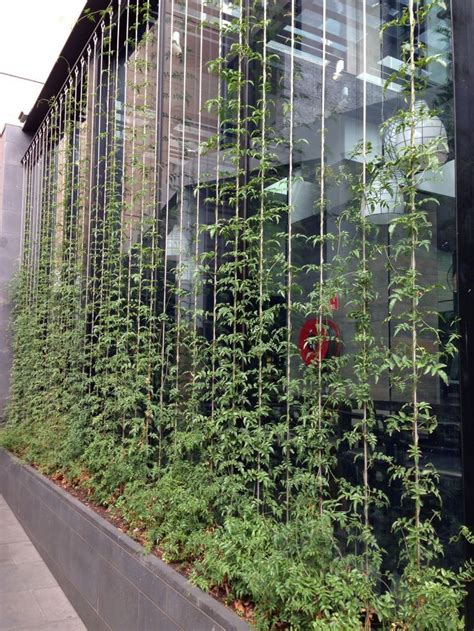 Vertical Garden Building Vertical Garden Climbing On Wires Vườn Treo