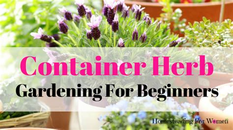 Herb Gardening For Beginners by Container Herb Gardening For Beginners Homesteading For