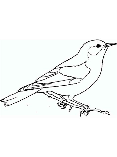 eastern bluebird coloring page eastern bluebird coloring download eastern bluebird coloring