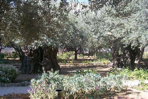 Garden Of Gethsemane Images by Garden Of Gethsemane