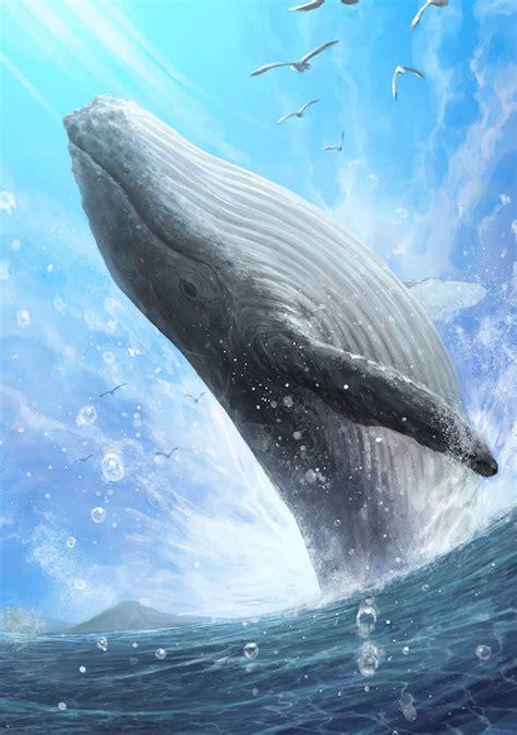 blue whale photo japari library  kemono friends wiki