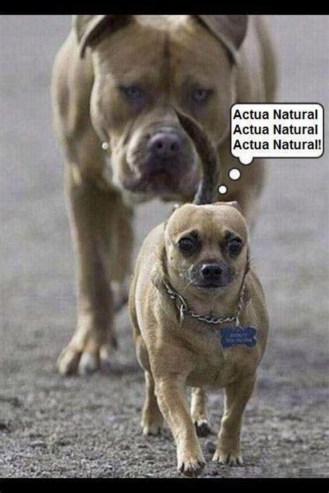 imagenes graciosas de cumpleaños de perros image gallery imagenes de perros chistosos