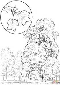 tulip leaf coloring page tulip tree or yellow poplar coloring page free printable