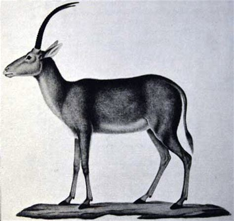 buck blue 10 extinct animals probably you didn t about