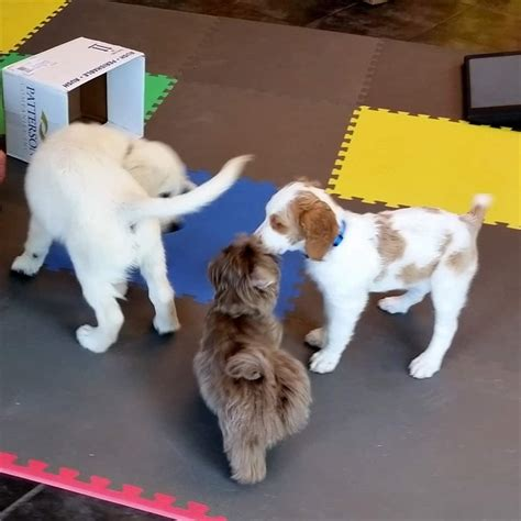 puppy kindergarten anchoredscraps balancing new technology communication with style corresponding