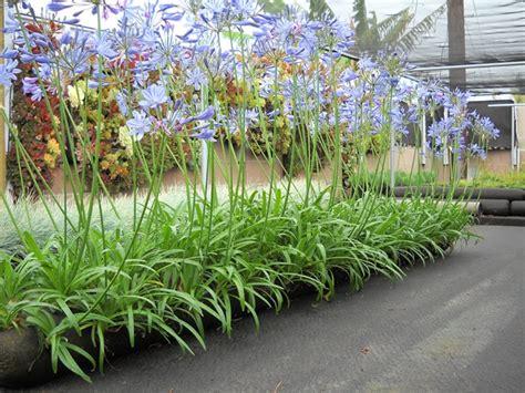 vertical gardening ideas planters