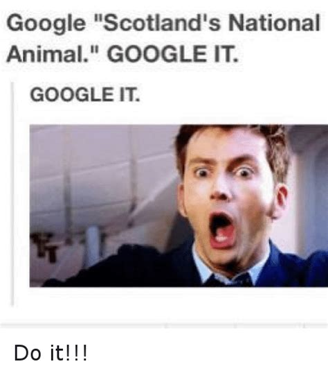 Google It Meme - google scotland s national animal go ahead google it now