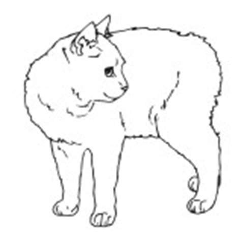 manx cat coloring page cat drawing for engraving