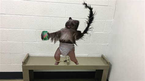 puppy monkey baby nj arrest puppy monkey baby nbc 10 philadelphia