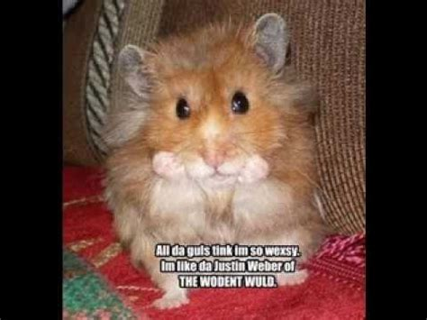 pictures with captions animal pictures with captions