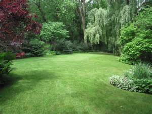 backyard trees landscaping ideas search