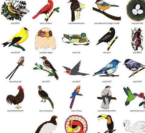 all different breeds different types hawk birds names pictures to pin on