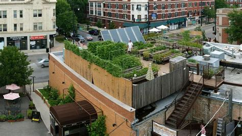 Urban Gardening Nyc - rooftop farming is getting off the ground the salt npr