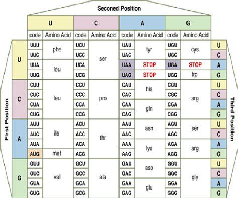 amino acid codon table the amino acid codons table scientific diagram