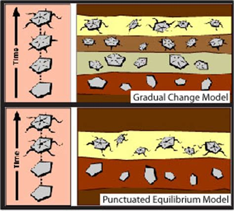 gradual change vs. punctuated equilibrium : the study of