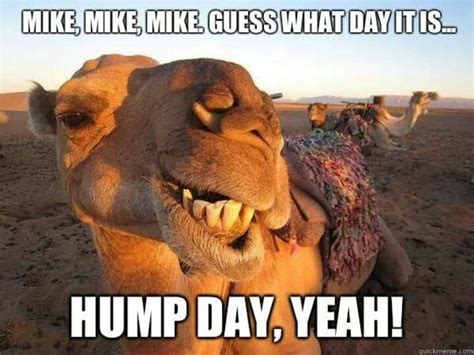 Hump Day Meme - guess what day it is hump day meme the random vibez