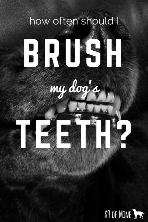 how often should you wash a puppy 25 best ideas about teeth on do wolves bark care and puppy care