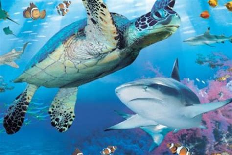 sea life brighton aquarium offers, discounts & cheap