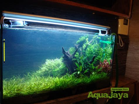 aquascape gallery gallery aquascape aquajaya