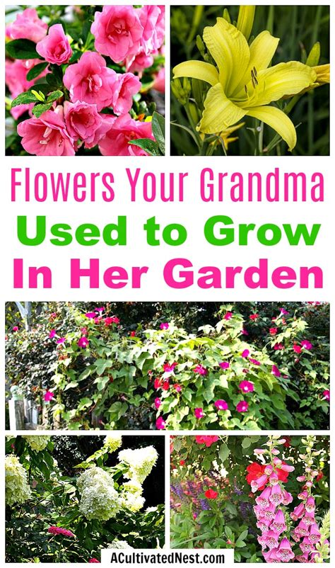 fashioned flowers your used to grow in garden