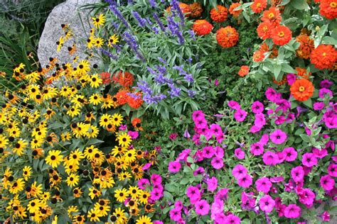 flowers by season in colorado springs timberline