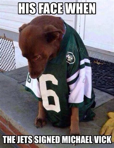 Michael Vick Memes - jets michael vick sad dog sports pinterest