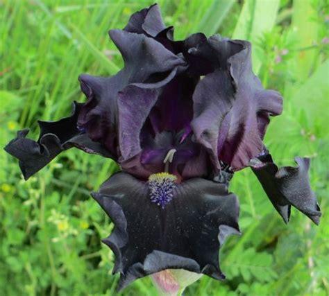 schreinerei köln lövenich iris name yosemite nights