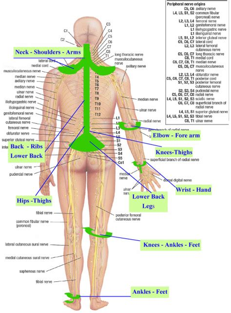 diagram of nerves in back topical nerve block