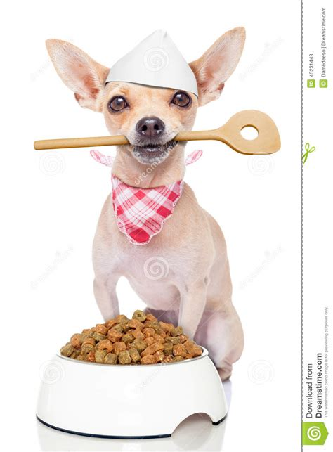 how to cook dogs hungry chef cook stock photo image 45231443