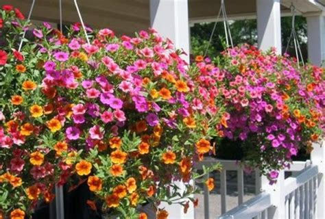 Hanging Flower Planters by Hanging Flower Pots Garden Outdoors