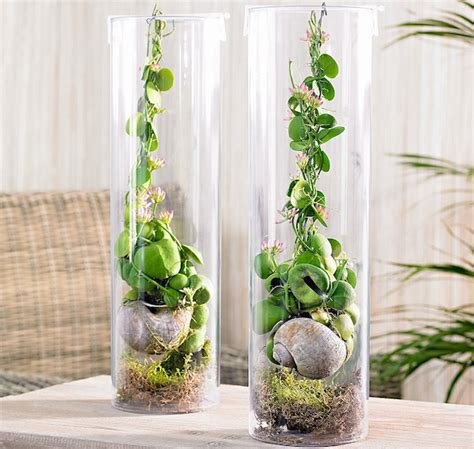 piante per appartamento pianta da appartamento quale scegliere idee green