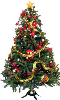 Christmas Tree Pictures by Christmas Tree Png Transparent Images Png All