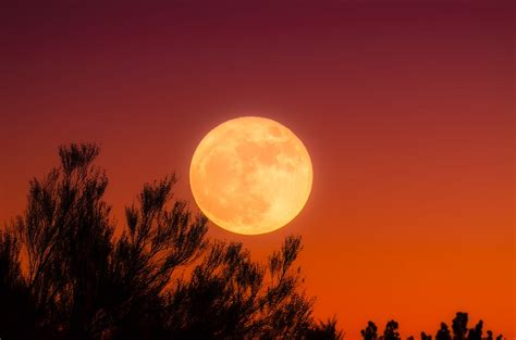 harvest moon free photo harvest moon full moon sky night free