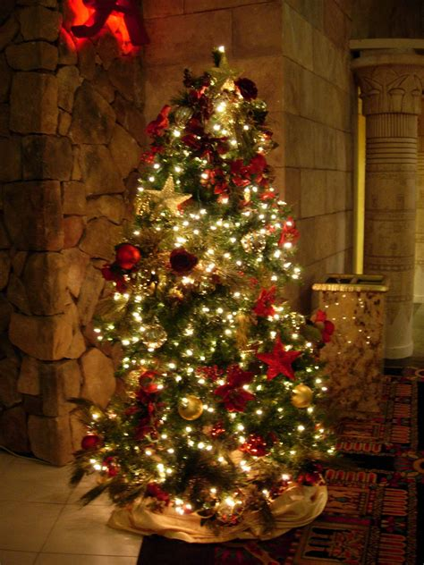 home decorators christmas trees pics facts funny stuff about animals nature most beautiful