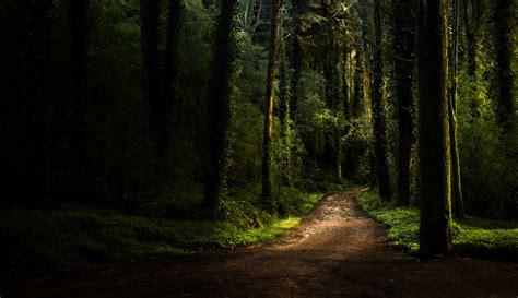 imagenes hd bosques fondos de pantalla 2048x1183 bosques carreteras 225 rboles