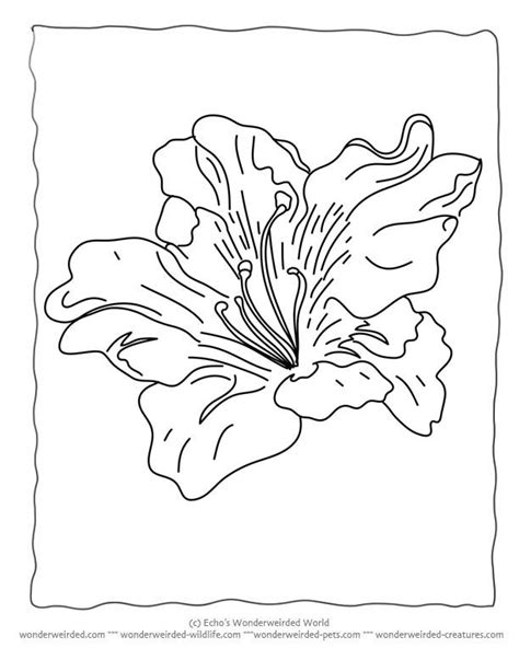 types of flowers coloring pages 26 best images about skilder inkleursketse on